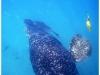 australia-lizard-island-big-simon-reclama-la-sua-parte-di-cibo