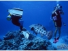 australia-lizard-island-cod-hole-potato-cod-02