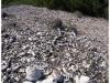 australia-lizard-island-grandi-mucchi-di-resti-di-conchiglie-a-coconut-beach