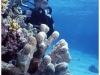 australia-lizard-island-parete-di-coralli-a-vertical-gardens