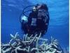 australia-lizard-island-ribbon-reef-10-a-spasso-tra-i-coralli-01