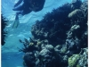 australia-lizard-island-ribbon-reef-10-a-spasso-tra-i-coralli-03