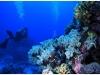 australia-lizard-island-ribbon-reef-10