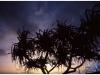 australia-lizard-island-tramonto-a-sunset-beach