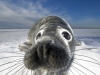 foto-naturalistica-british-wildlife-photographer-of-the-year-awards-image-c-mark-smith