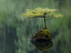foto-naturalistiche-big_adam-gibbs-fairy-bonsai-veolia-environnement-wildlife-2012
