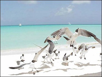 Los-Roques-uccelli