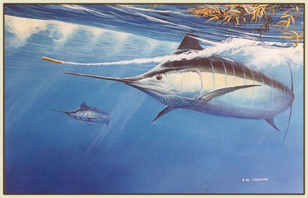 striped-marlin2