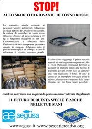 Stop-pesca-tonni-giovanili