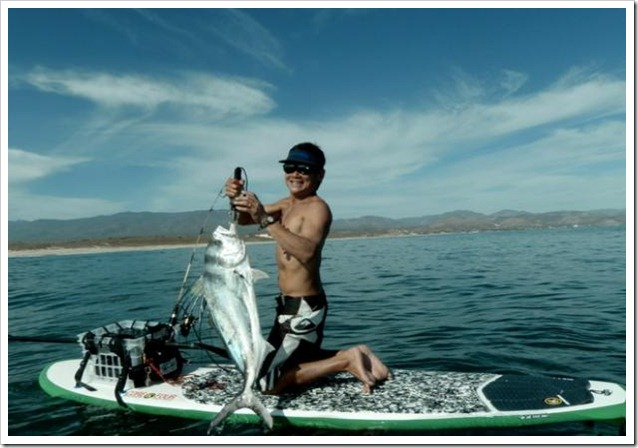 Roosterfish e sup Baja Californa