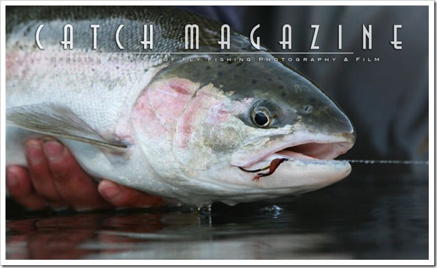 Catch-a-Magazine