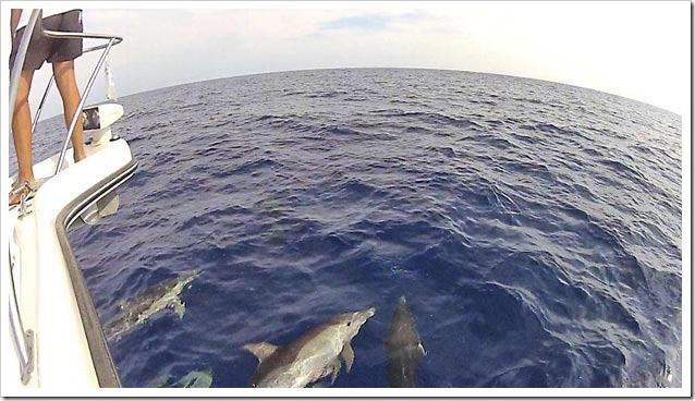 Delfini-Comuni-al-largo-di-Posada-ripresi-da-Luciana-Gerardi