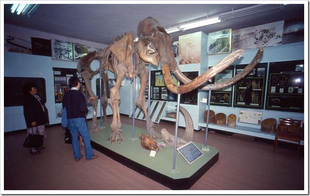 Siberia--Museo-di-Yakusk-scheletro-mammuth