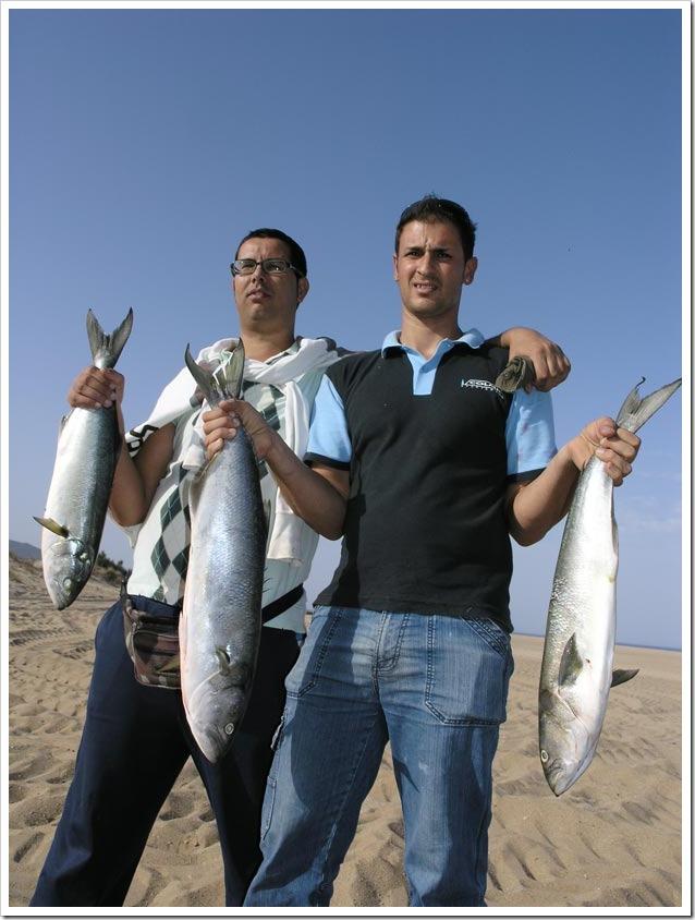 Big-Fish-Arbus-2012-Box-primo-classificato