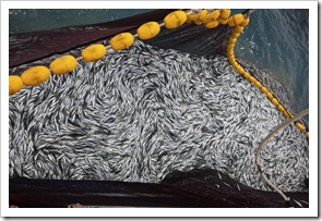 Water-Overfishing-reeling-in-the-food-cycle-695x463
