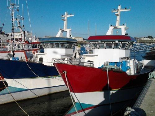Pesce azzurro al collasso for Barca a vapore per barche da pesca