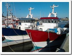 barca-da-pesca-professionale-per-sardine-35880-2861549