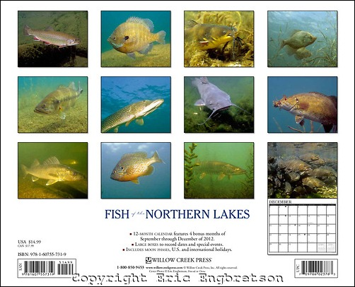Fish of the Northern Lakes Underwater photography  rear