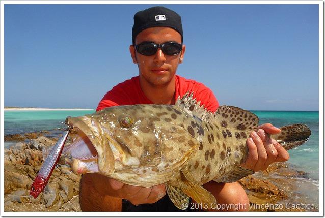 Tropici-da-riva-cernia-tropicale