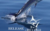 Billfish-Foundation-release-ruler.jpg