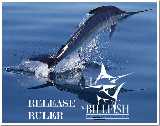 Billfish-Foundation-release-ruler