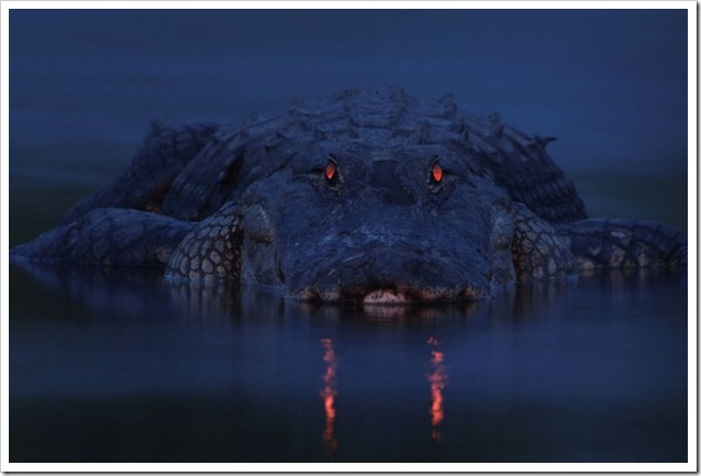 Foto naturalistiche big_larry-linch-warning-night-light-veolia-environnement-wildlife-2012