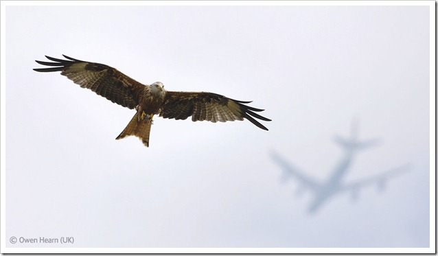 Foto naturalistiche big_owen-hearn-uk-flight-paths-veolia-environnement-wildlife-2012