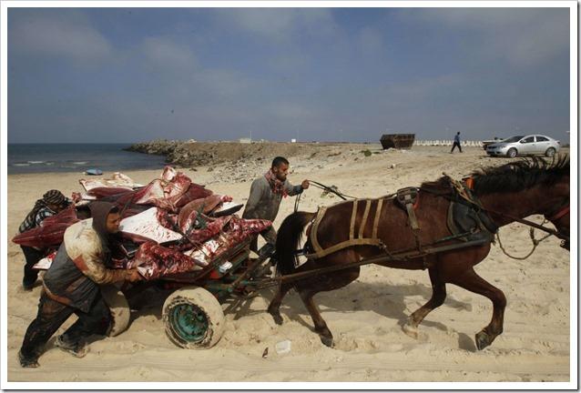 Mante a Gaza 1
