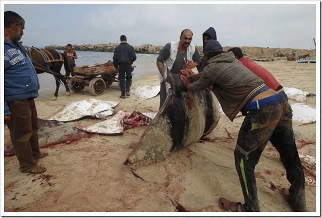 Mante a Gaza 3
