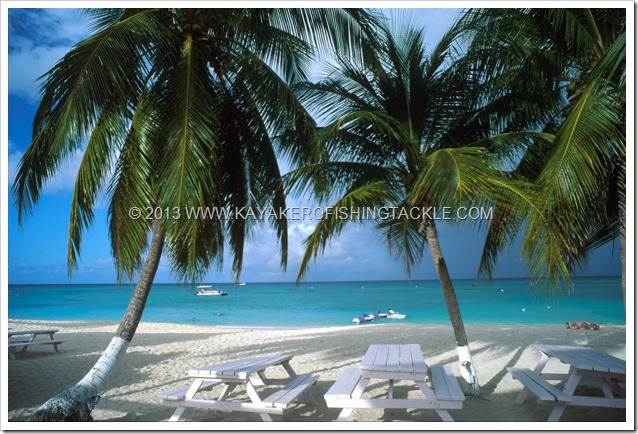 Wahoo-Cayman----19-----Seven-Mile-Beach---Cayman