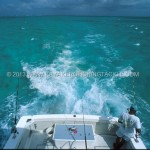 Wahoo-Cayman-03-Trolling-su-Pickle-Bank.jpg