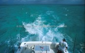 Wahoo-Cayman-03-Trolling-su-Pickle-Bank.jpg