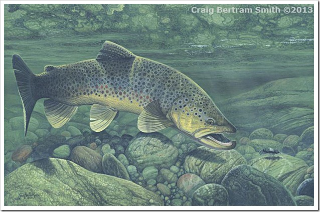 Craig Smith Bertram brown trout
