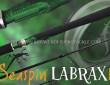 LABRAXINA-SEASPIN-Cover-a.jpg