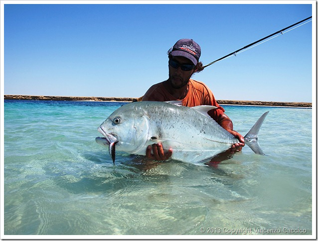 Sudan fly fishing trevally con streamer