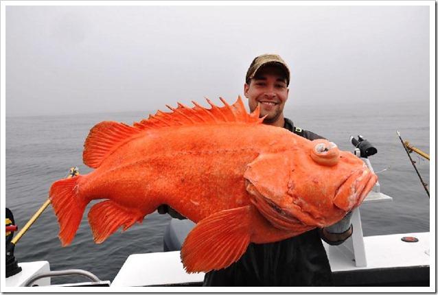Big rock fish