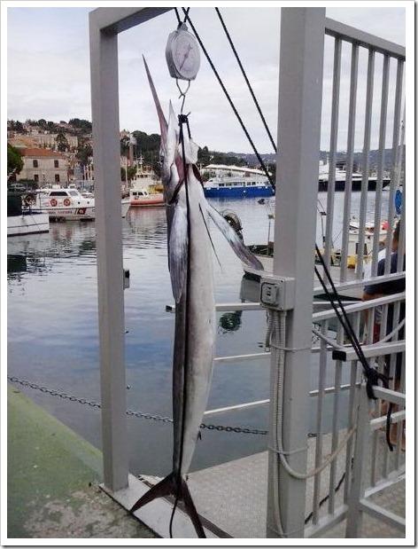 Marlin Bianco Imperia verticale