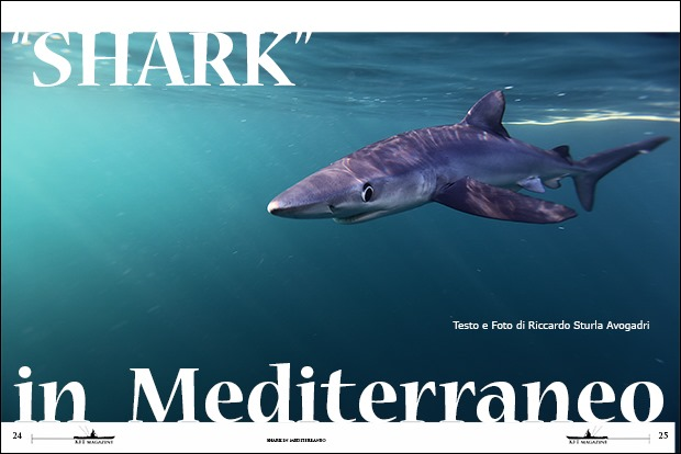 013-KFT-SHARK-in-Mediterraneo-1-cover
