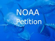 NOAA-Petition-Tuna.jpg