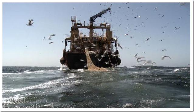 Cabo Verde overfishing