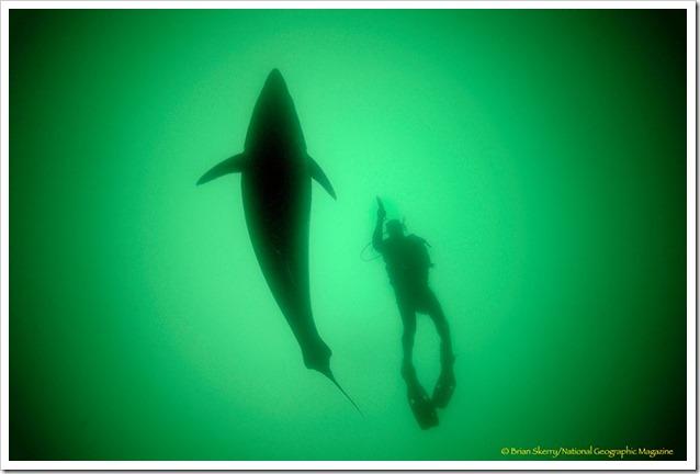 Tonni underwater 1