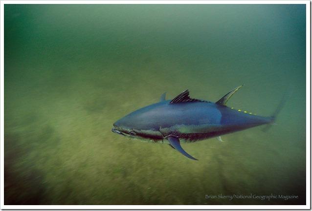 Tonni underwater 2