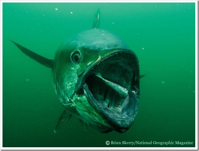 Tonni underwater 6