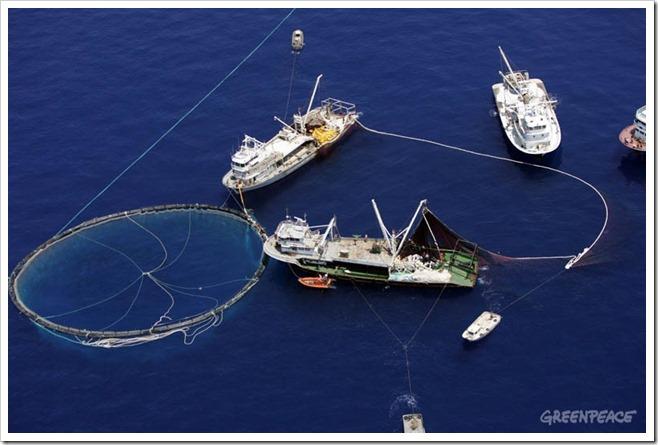 Turkish Tuna Fishermen