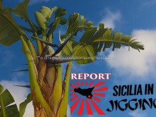 Sicilia-in-Jigging-report-Kamena-Residence-cover.jpg