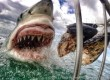 Withe-shark-GoPro.jpg