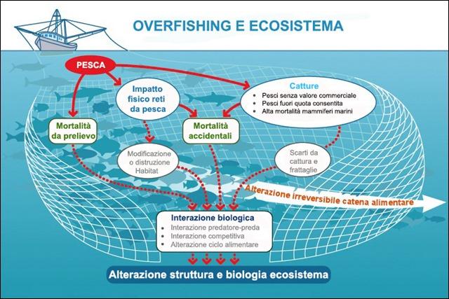 LMS_SCI_ART_04_HumanImpactsOnTheBay_ecosystem_overfishing_01