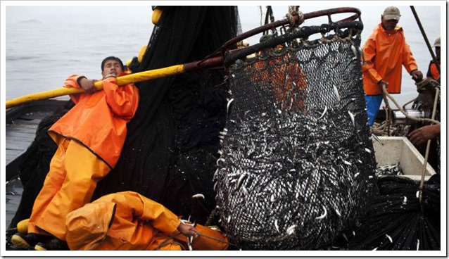 Sardine del Pacifico Pesca