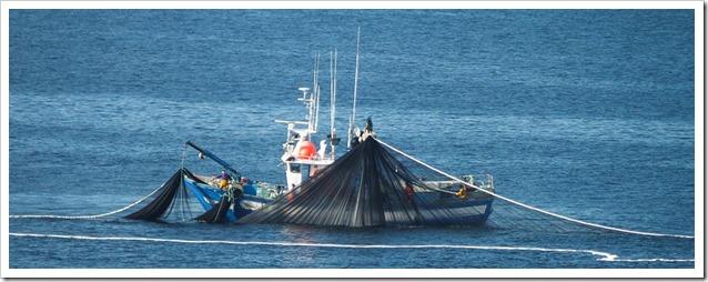 Sardine del Pacifico pesca e reti