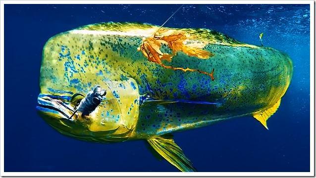 Go-Fishing-Cam-Dorado